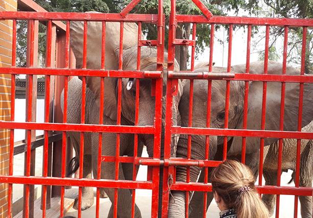Karachi Zoo (1)