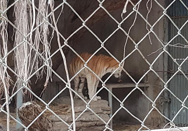 Karachi Zoo (10)