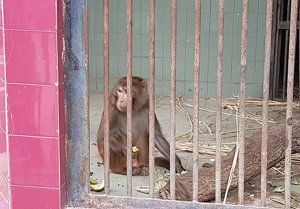 Karachi Zoo (11)