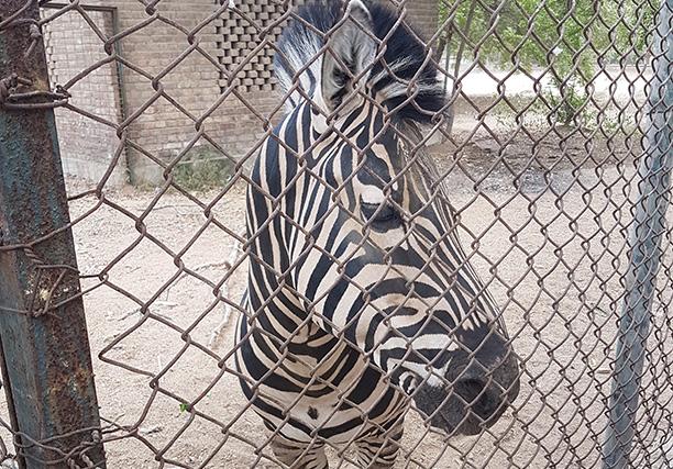 Karachi Zoo (12)