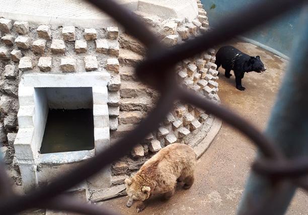 Karachi Zoo (17)