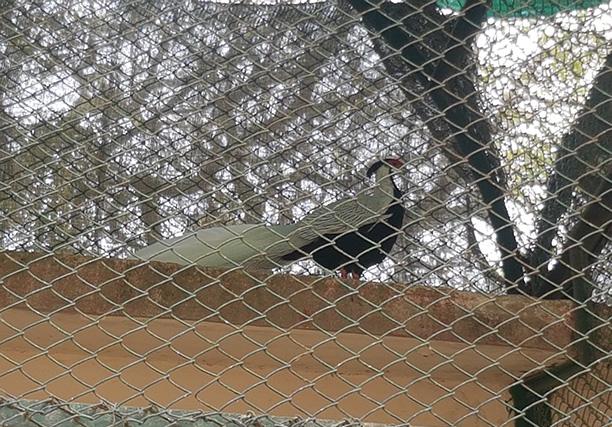 Karachi Zoo (2)