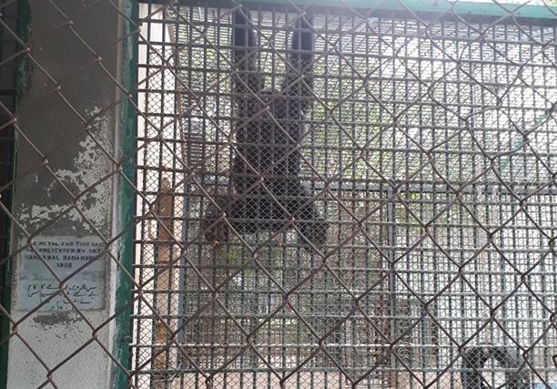 Karachi Zoo (25)