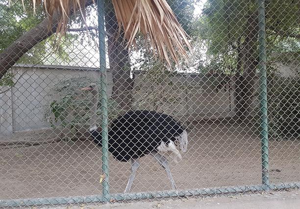 Karachi Zoo (3)