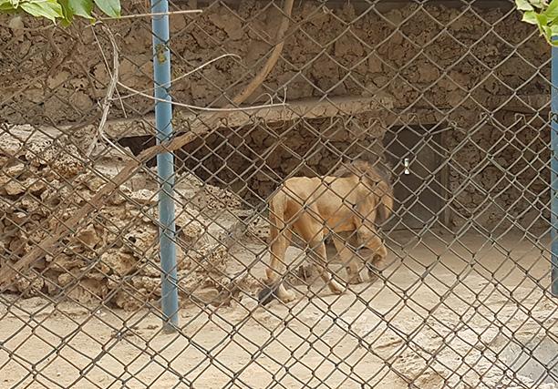 Karachi Zoo (8)