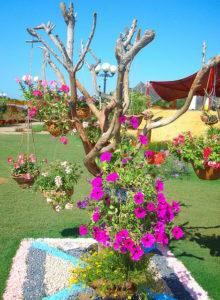 karachi flower show 2