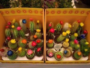 karachi flower show