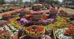 karachi flowershow 1